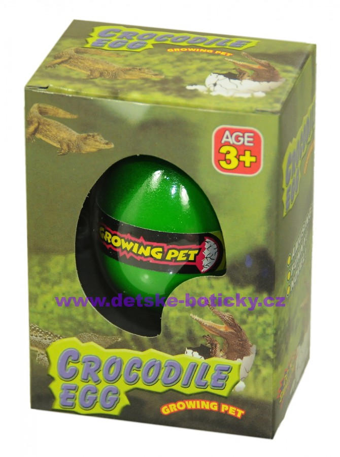 Growing pet crocodile egg líhnoucí vejce krokodýl