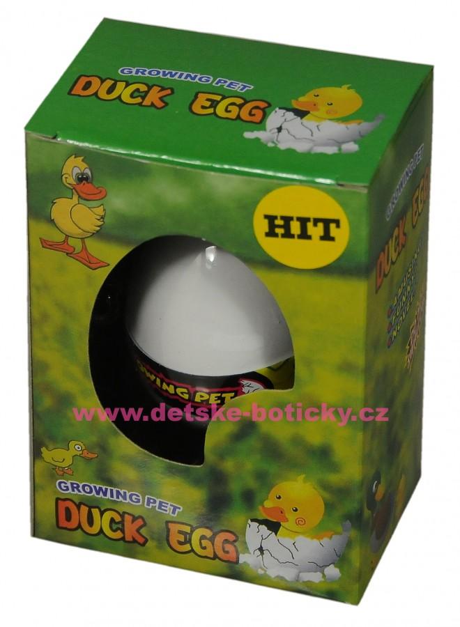 Growing pet Duck egg  líhnoucí vejce kachna