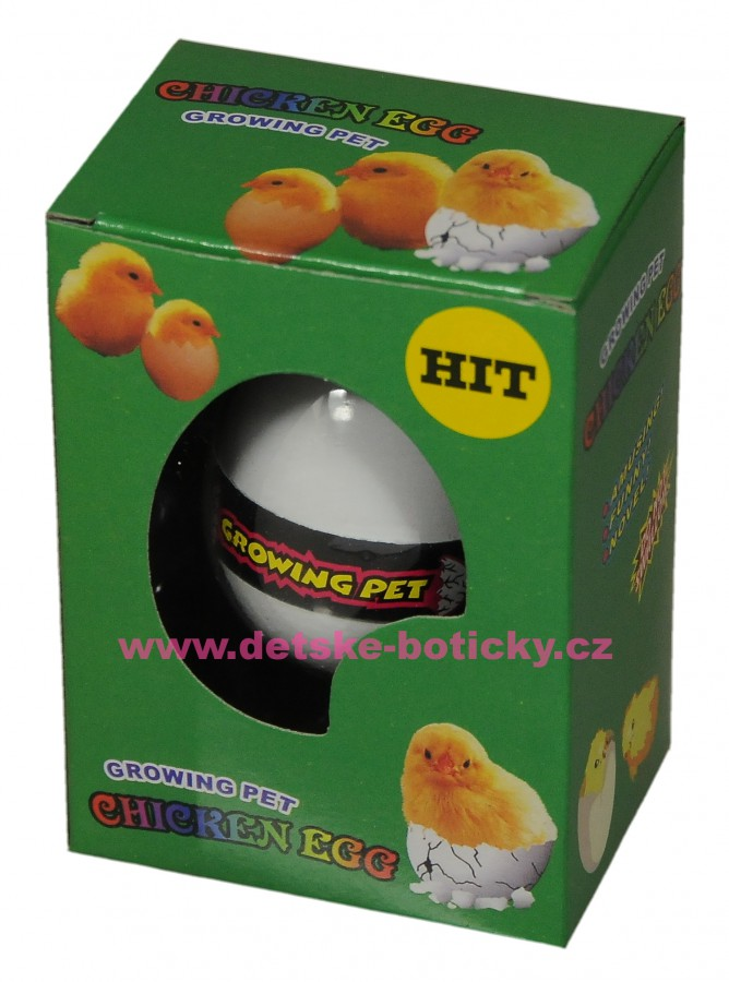 Growing pet Chcken egg  líhnoucí vejce kuře