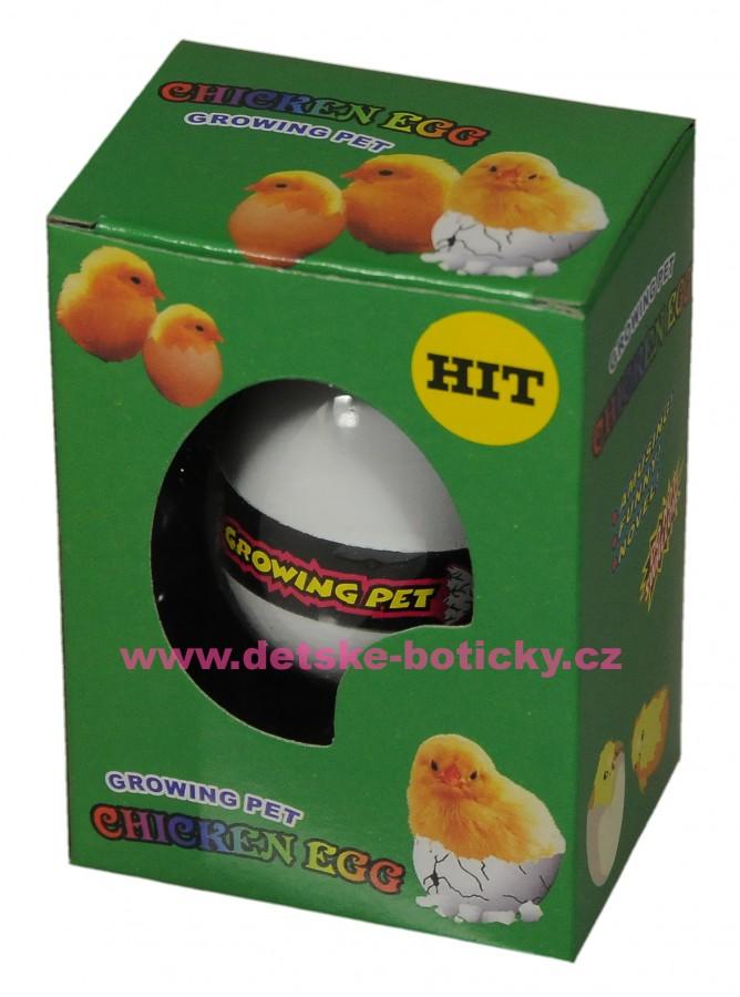 Growing pet Chcken egg  líhnoucí vejce kuře