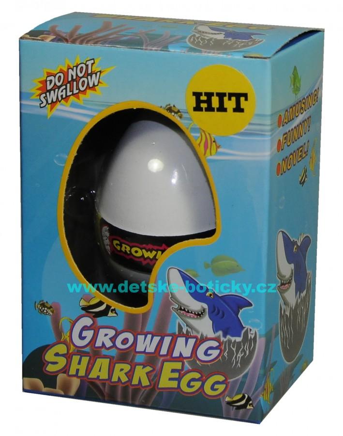 Growing pet Shark egg líhnoucí vejce žralok